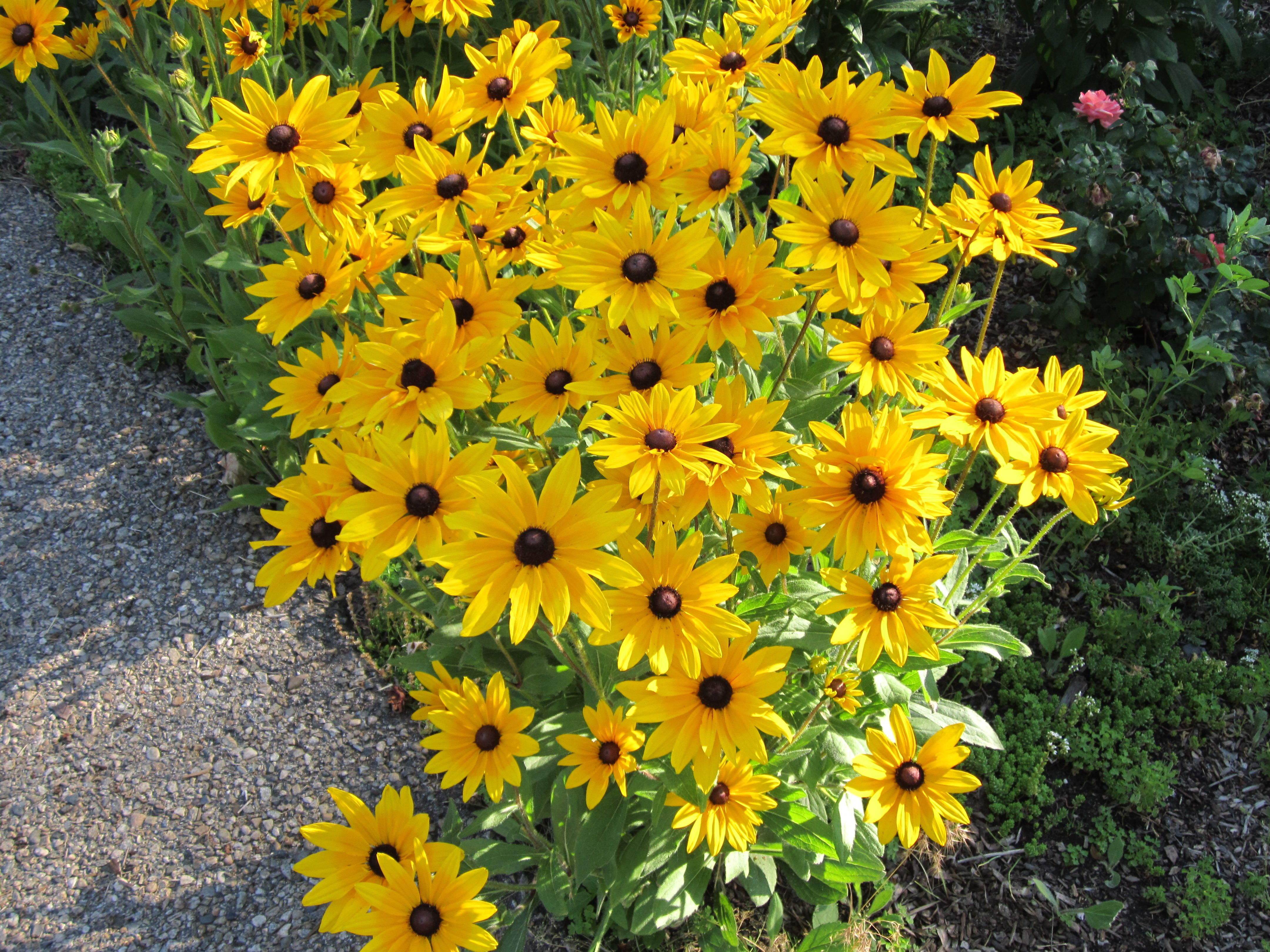 These Pretty Yellow Flowers That Grow Everywhere In The Spring And