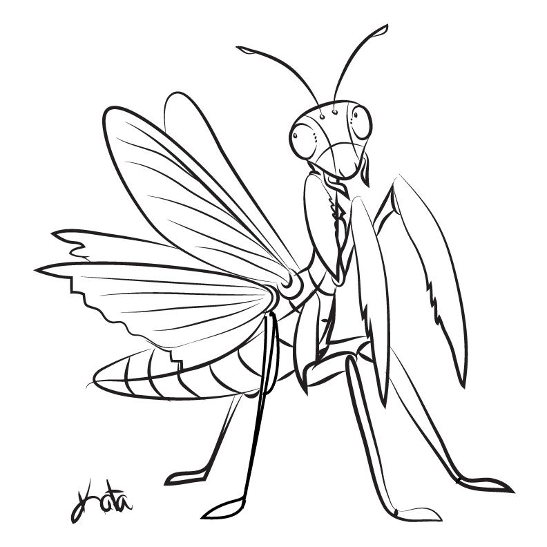 Praying Mantis Mantis Tattoo Praying Mantis Sketches