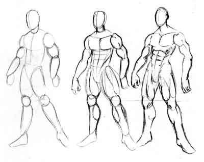 Cuerpo Humano Anatomia Dibujo