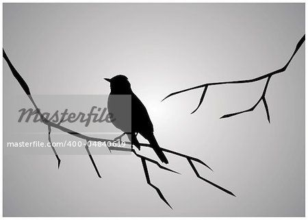 vector illustration of bird silhouette sitting on the branch ...