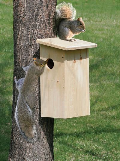 squirrel house nos amis les b tes pinterest nichoir nid oiseau et nichoir oiseau. Black Bedroom Furniture Sets. Home Design Ideas