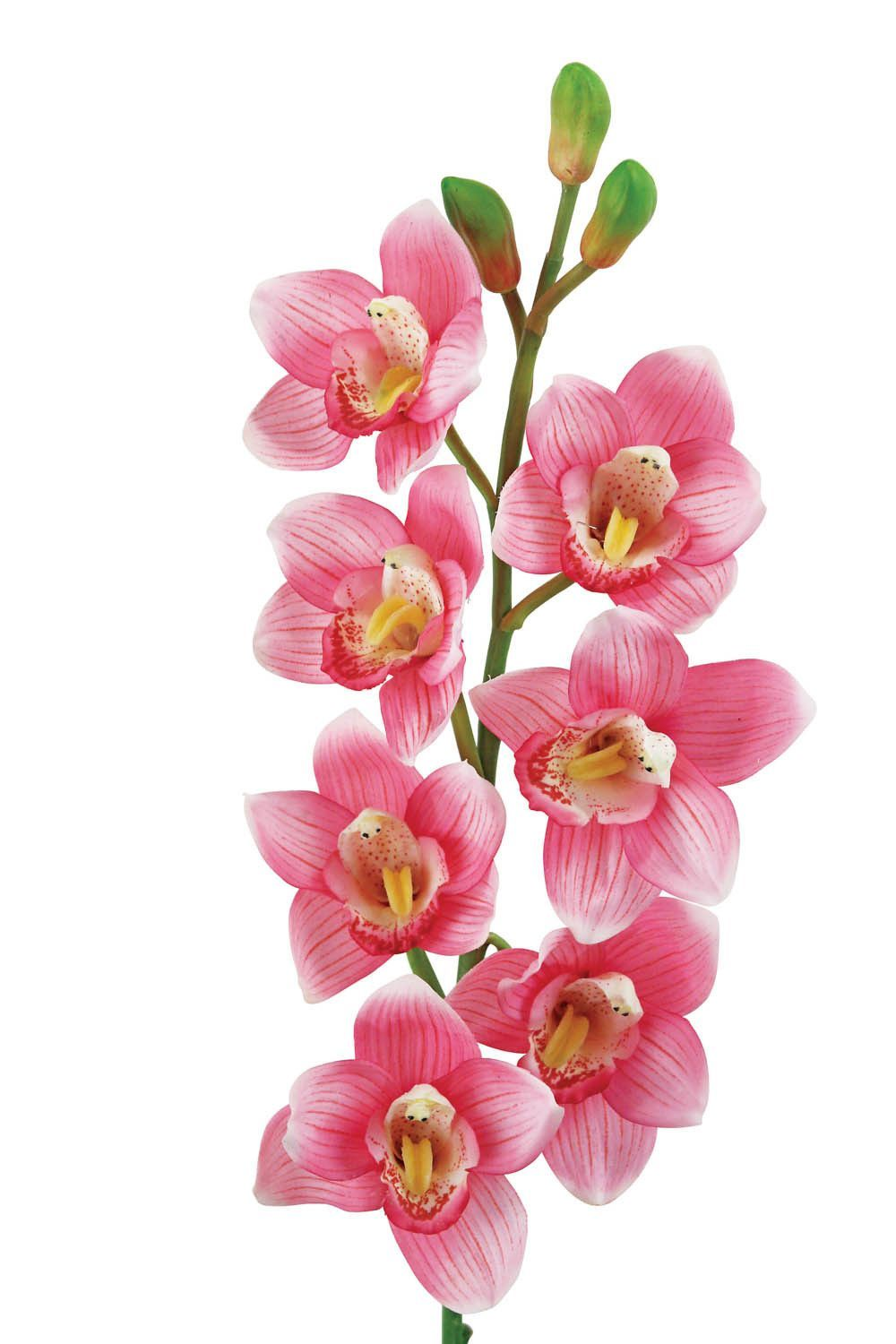 Laura Cole 31 Cymbidium Orchid Silk Flower Stem Set Of 12 Cymbidium Orchids Orchids Pink Flower Pictures