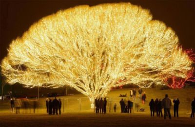 Wonder if this tree can be seen from space…