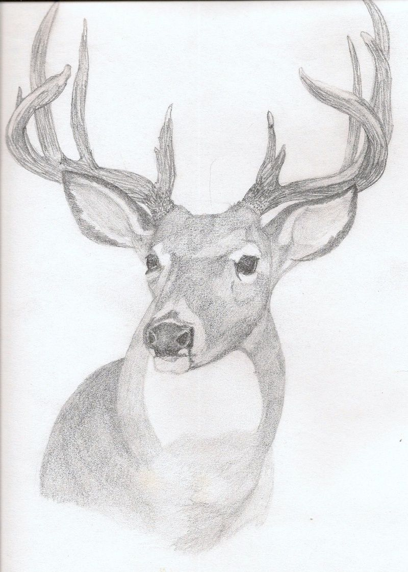 Deer drawings in pencil art deer rough sketch in pencil