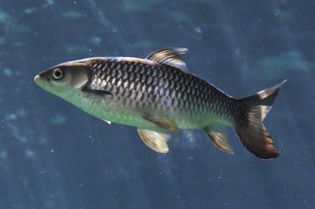 Fish In Water Images Galleries With A