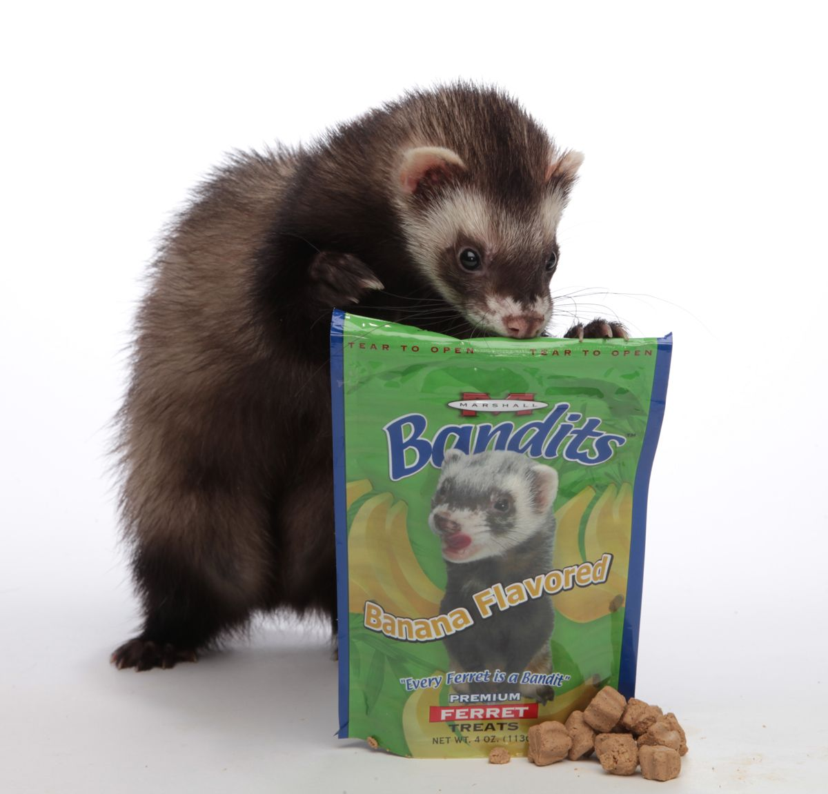Yummy Bandit Treats For Ferrets Pet Ferret Ferret Ferret Toys