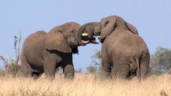 WORLD ANIMALS...TV2 AVARA LUONTO. All around WORLD ANIMALS. Love, Appreciate&Support. TV2 YLE.fi   MeWATCH ENJOY Smile...