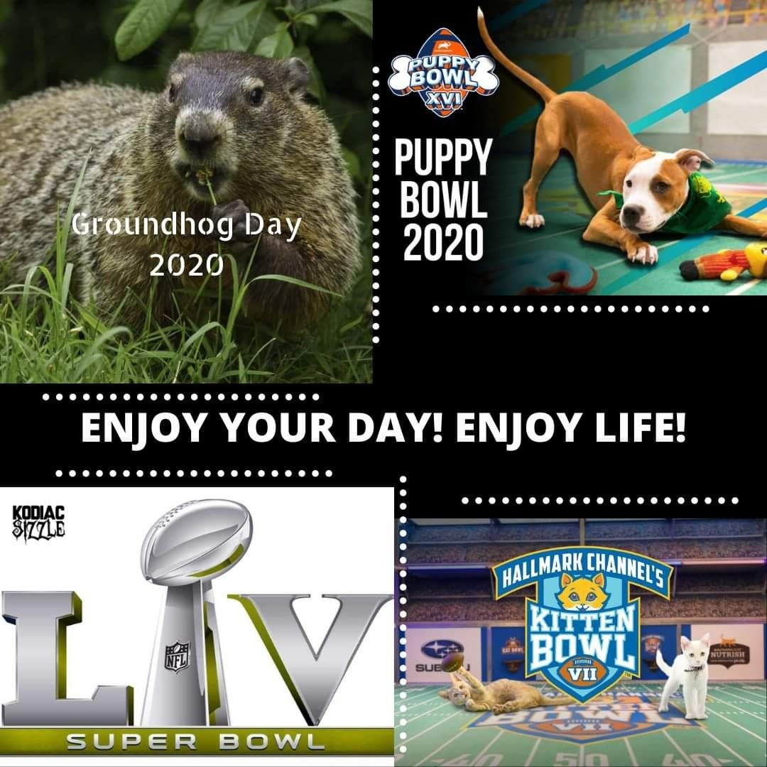 Pin By Kodiac Sizzle On Holidaze In 2020 Puppy Bowls Kitten Bowls Enjoy Life