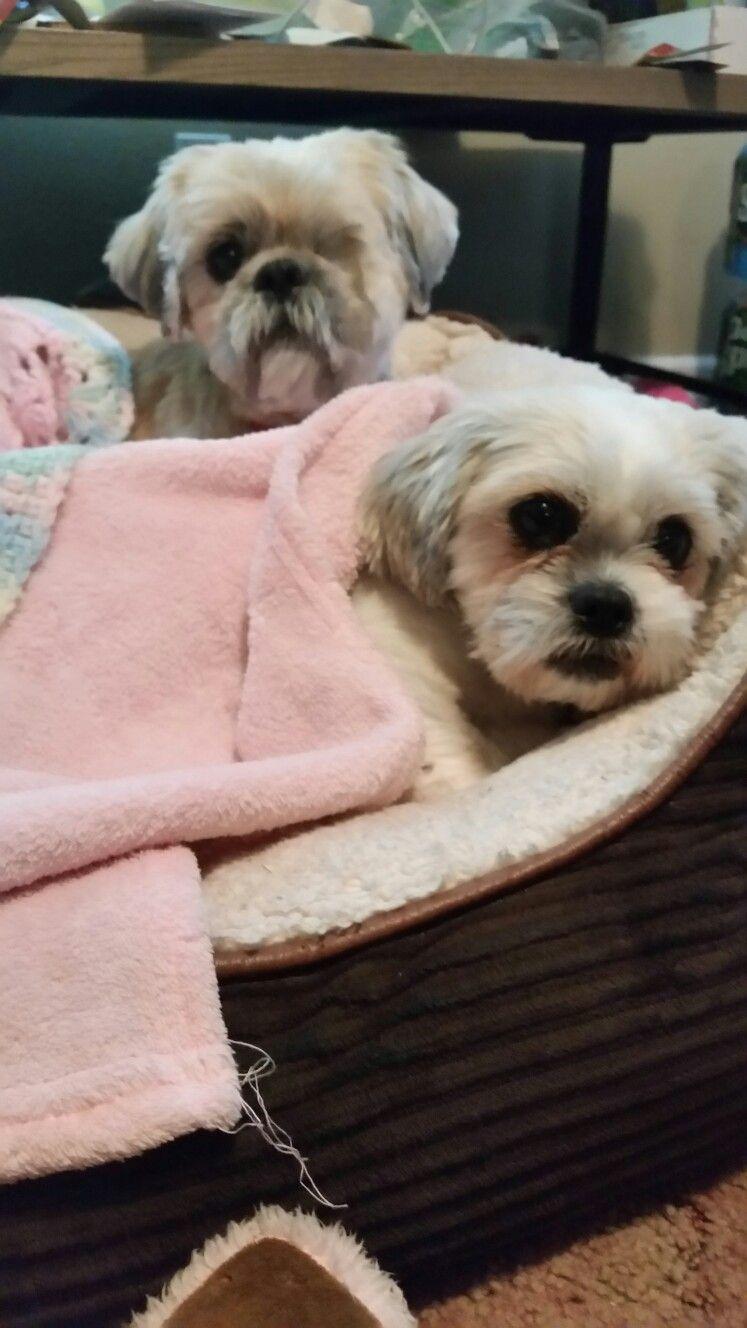Pin by elaina k on adorable pinterest dog