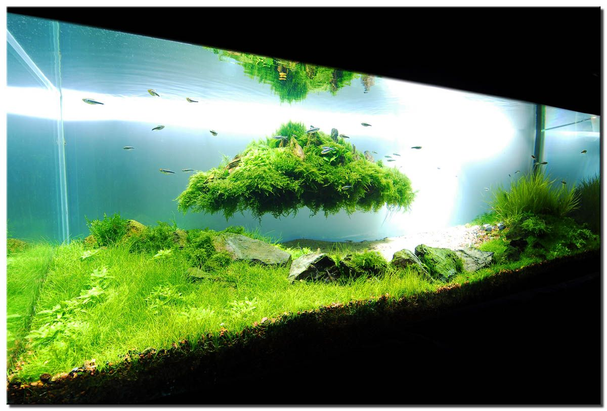 Aquariums can add a flare of the exotic or serene beauty to any
