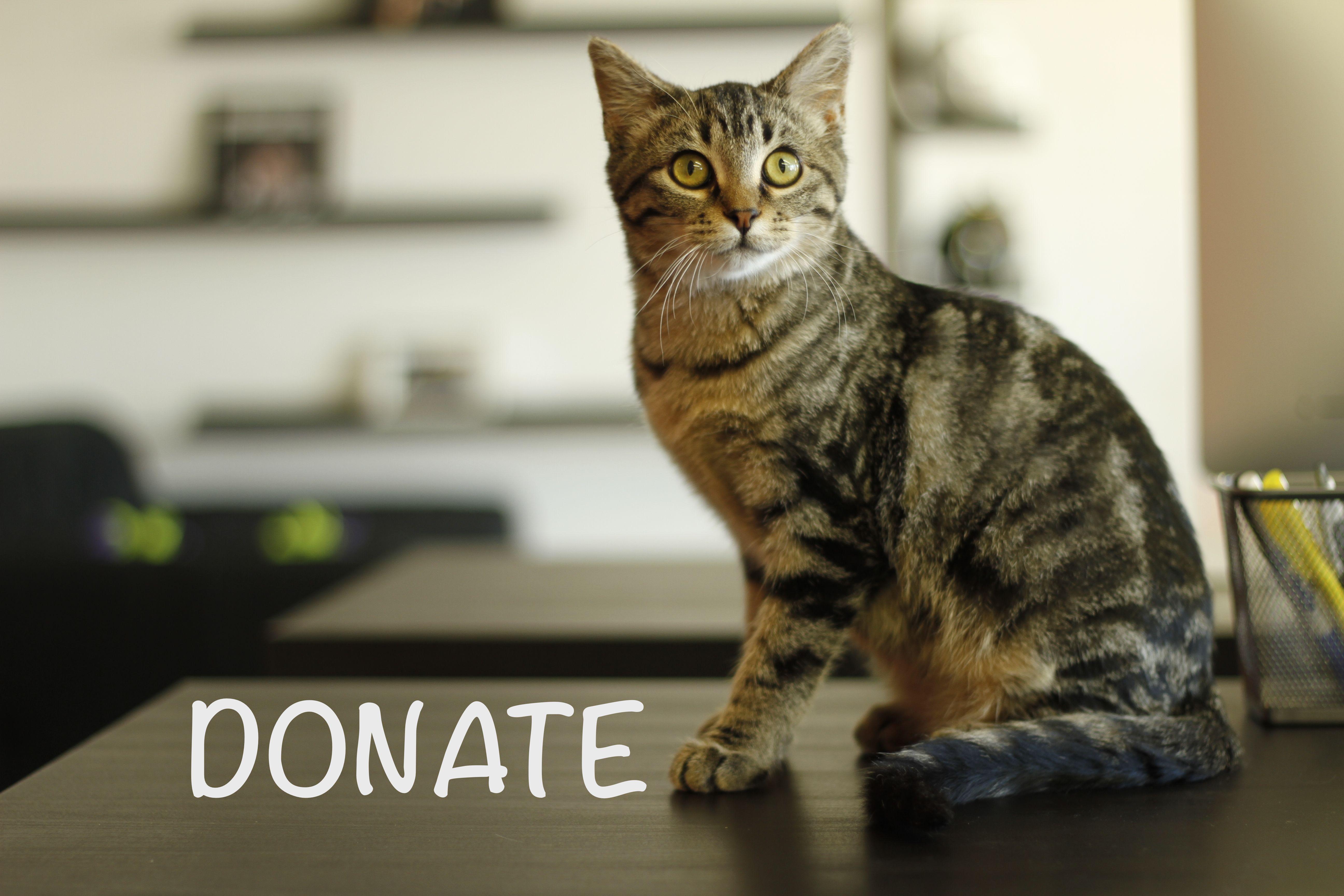 Donate Animals, Kitten rescue, Cat adoption