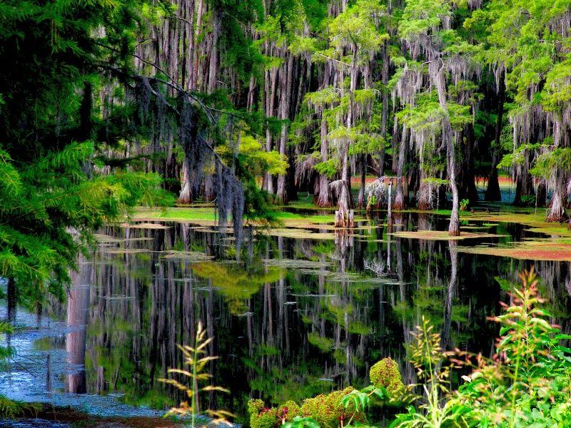 Louisiana Swamps And Bayous Bayou Desiard Monroe