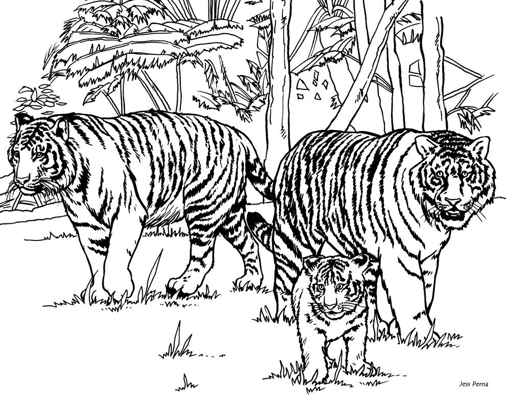 Realistic Tiger Coloring Pages Realistic Coloring Pages Tiger
