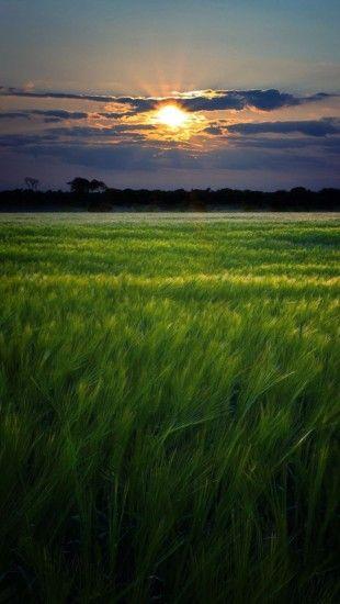 Green Fields Sunset Landscape Theiphonewalls Com Sunset