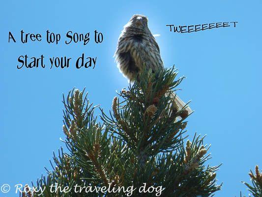 Bird in song