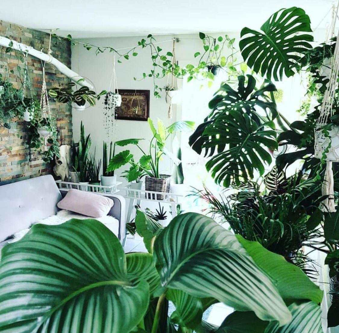 pingl par tanya sorrell sur indoor plant obsession pinterest plantes belle plante et les. Black Bedroom Furniture Sets. Home Design Ideas