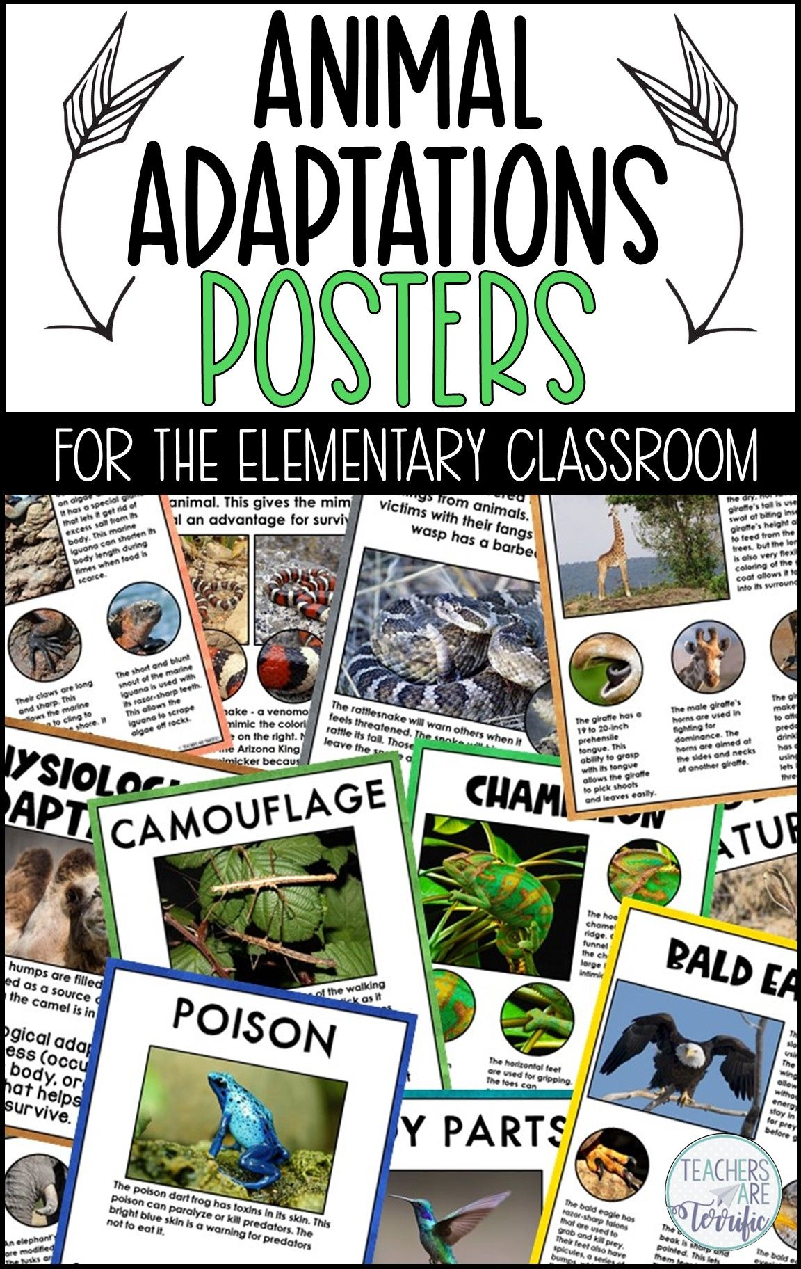 Animal Adaptations Posters And Worksheets