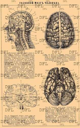 2015 Insane Asylum Halloween Party!-anatomy-brain-chart.jpg ...
