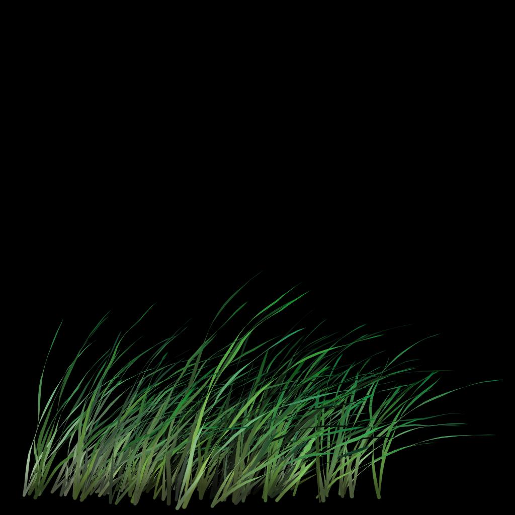 Tall Grass Google Sok