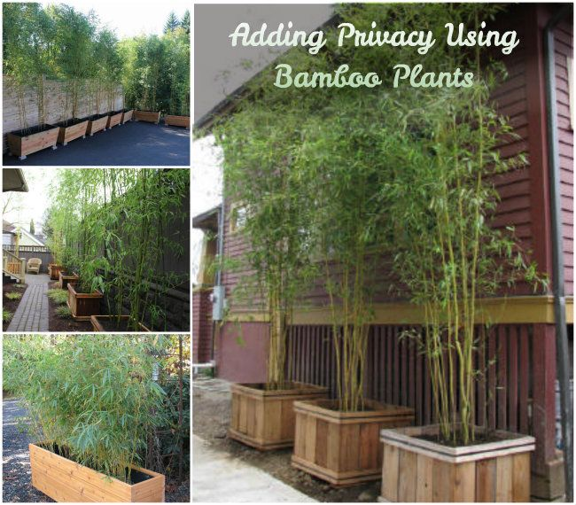 image result for using bamboo in a garden - Garden Design Using Bamboo