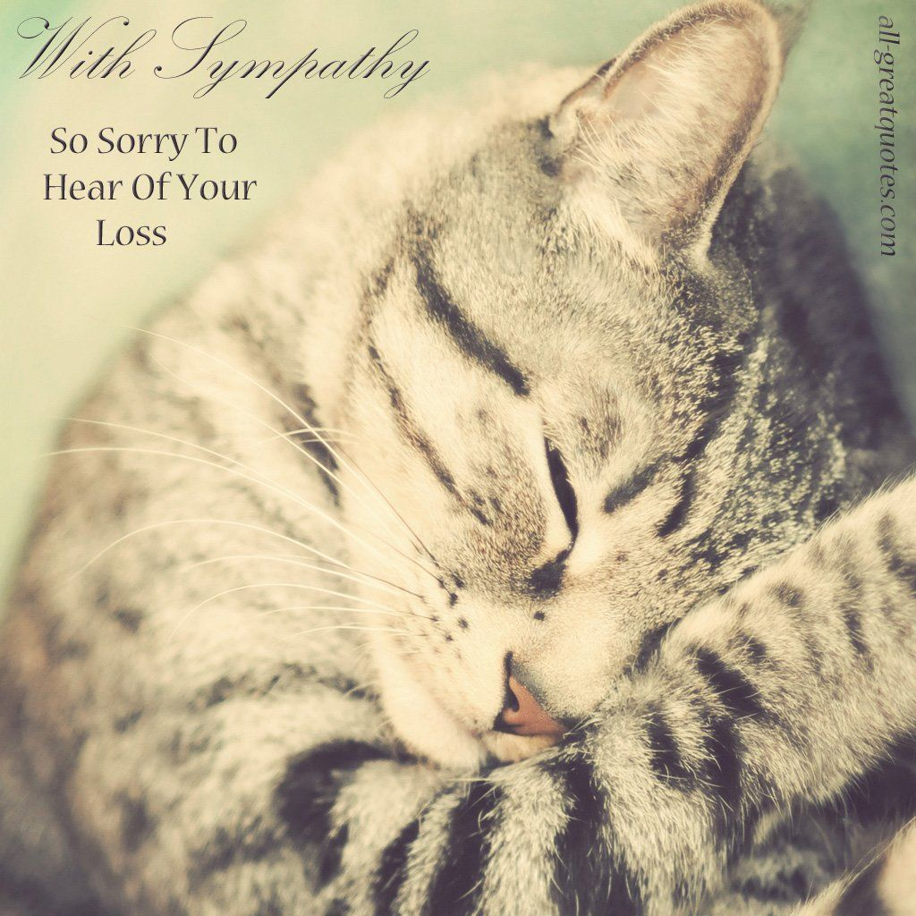 So Very Sorry To Hear Of The Loss Of Your Precious Fur Baby Animal Poems Pet Loss Pets