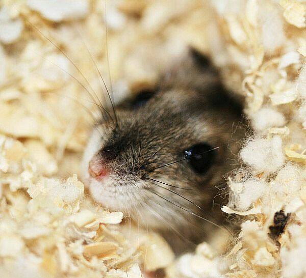 Pin by Kayla Huff on Hamsters Cute hamsters, Cute
