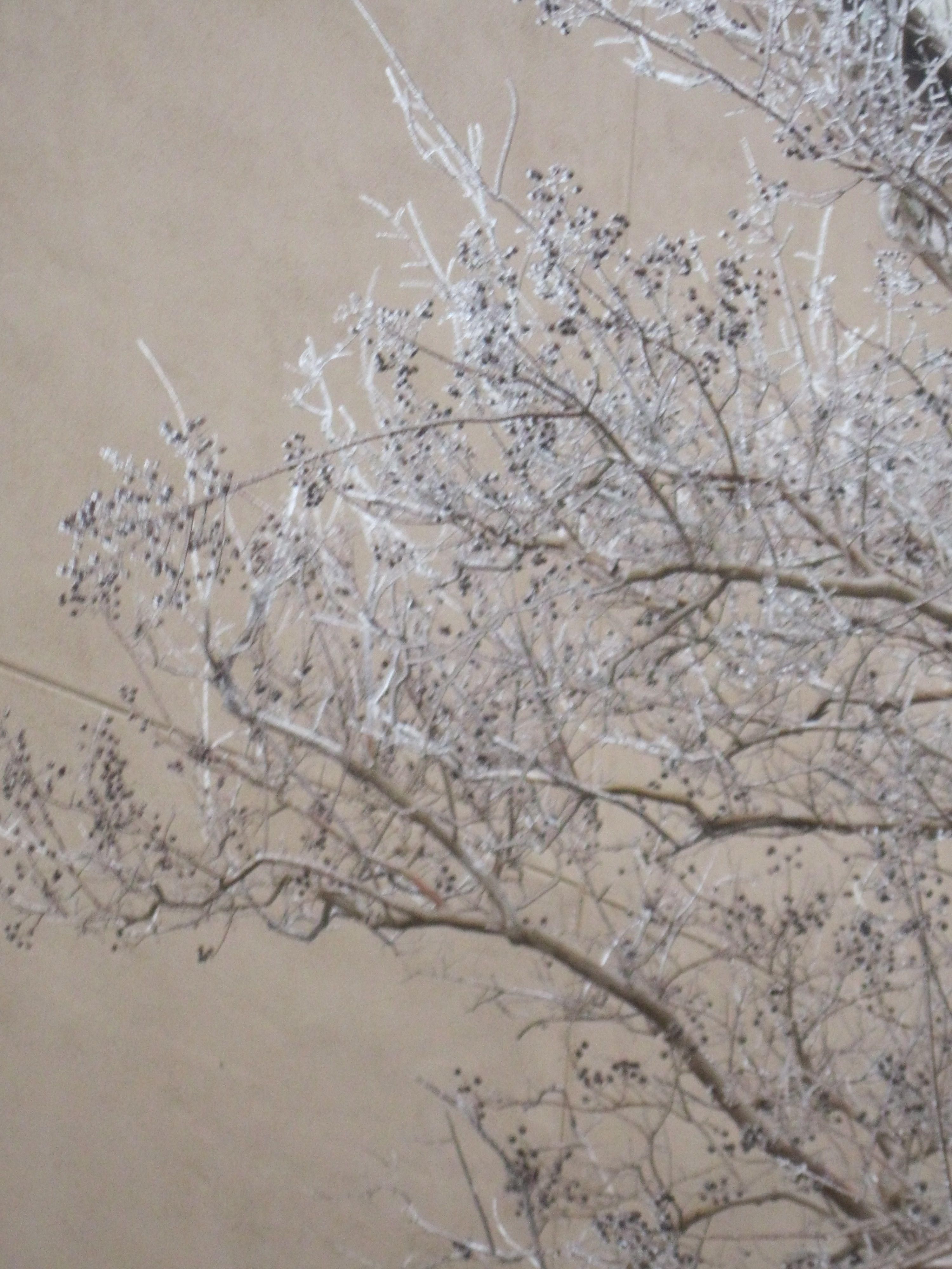 Ice on twigs