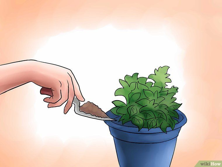 how to sprout potatoes in water