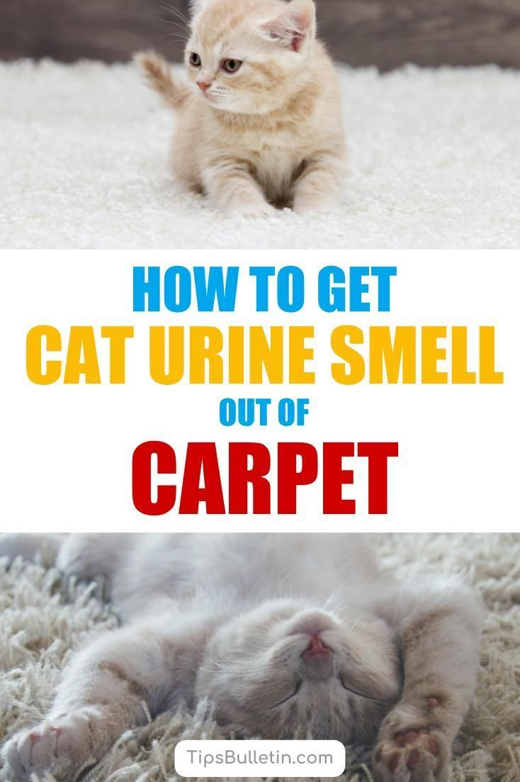 Find out how to get cat urine smell and pet odors out of the carpet with 6 tips and cleaning recipes. Includes homemade enzymatic cleaner and simple carpet ...