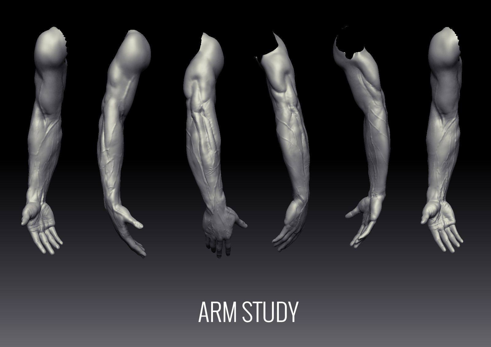Fundamentals Of Anatomy Arm And Leg Uartsy Human Body Modeling
