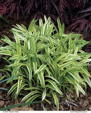 The Best Plants For Sunny Borders Gardening Garden Shrubs
