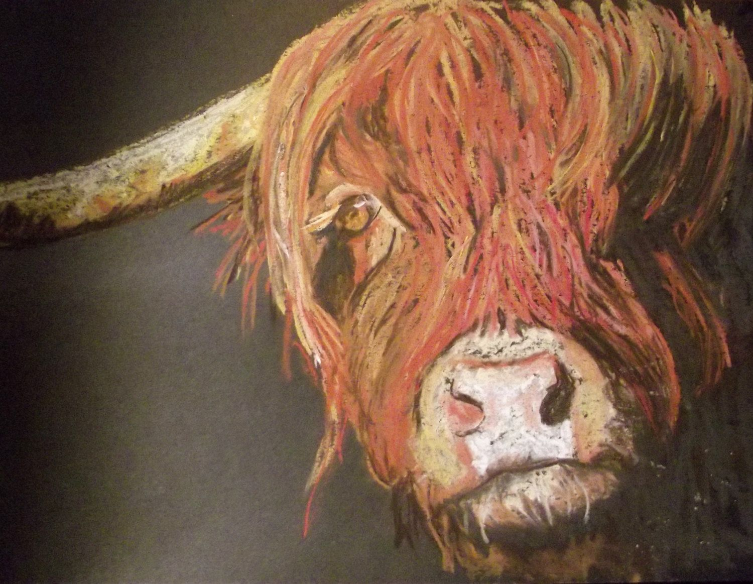 dark Boy, Highland coo, cow, drawn with soft pastels on black card, mounted and…