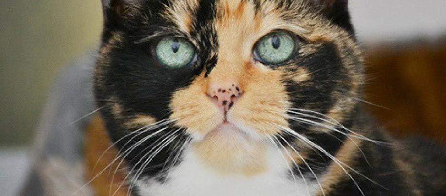 Celia Hammond Animal Trust Uk Animal Rescue Charity In 2020 Animal Rescue Animals Charity