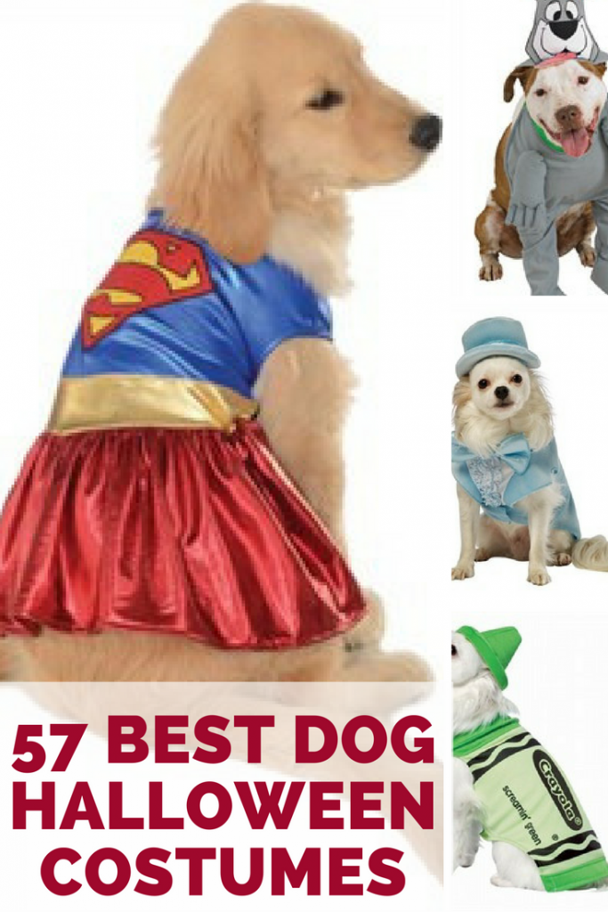 The Best Dog Halloween Costumes For Small To Large Dogs Dog