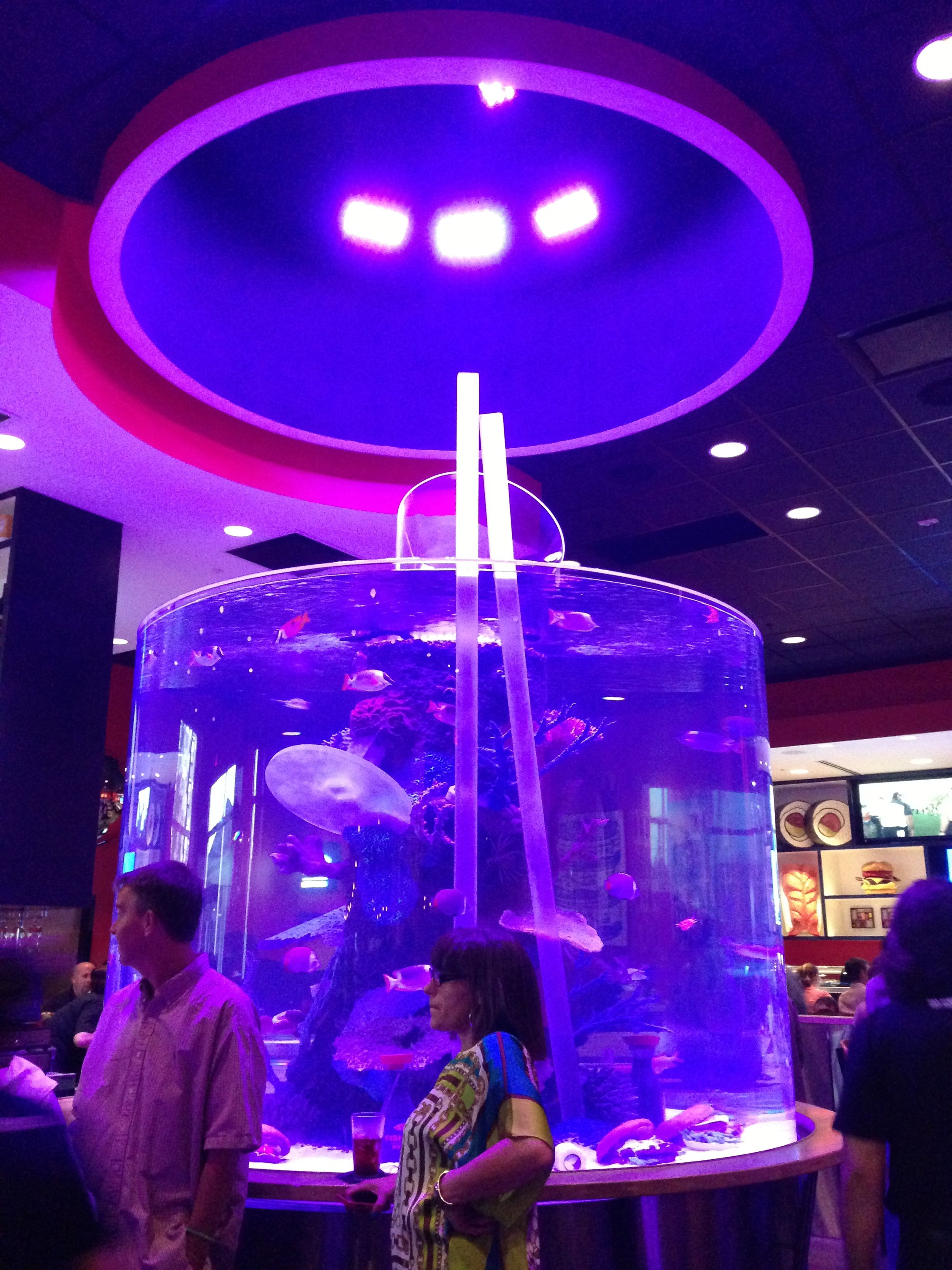 IMG_2290 Raleigh Aquarium fish tank, Fish tank, Cool