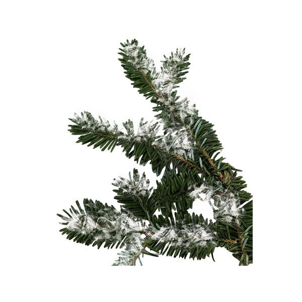 Dani3 Branch With Snow Liked On Polyvore Featuring Winter Christmas Trees And