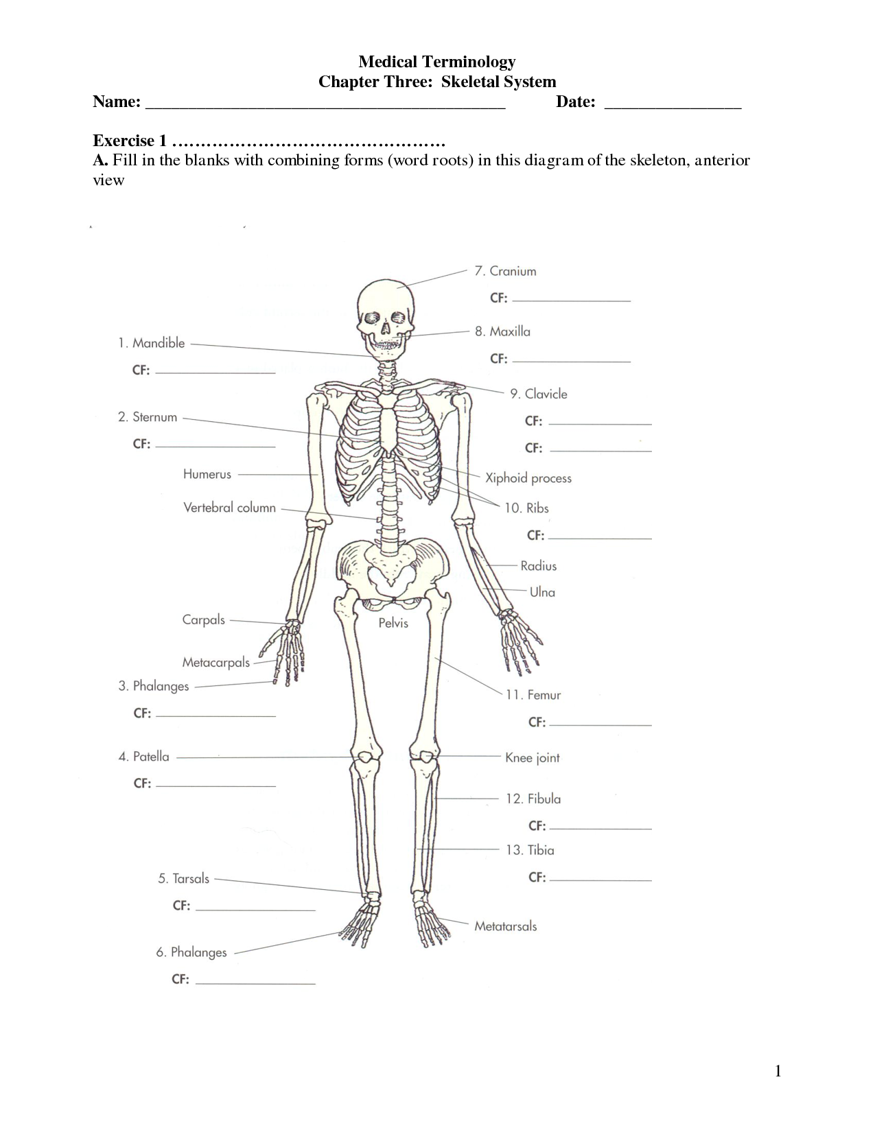 Labeled Diagram Of The Skeletal System Worksheet
