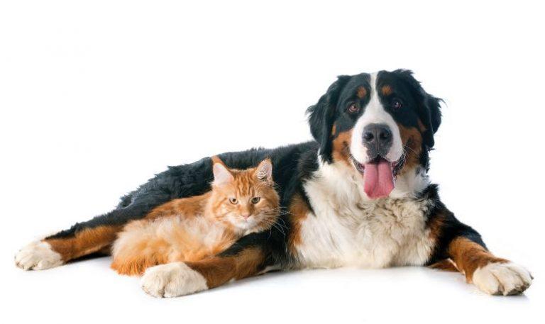 Remedio para eliminar pulgas de la cama de las mascotas