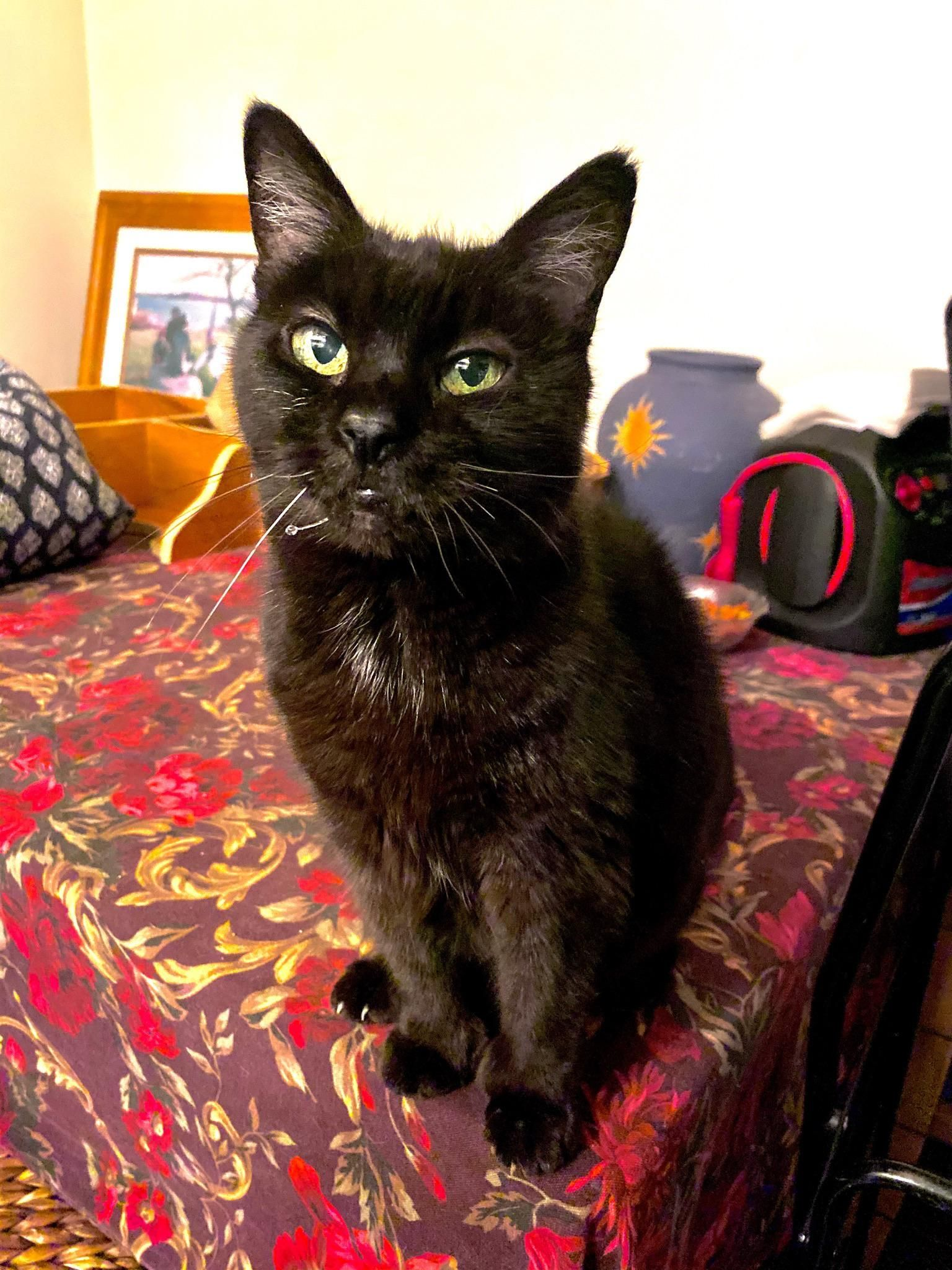 Mouse Is 19 She Purrs The Instant You Touch Her She S A Very Happy House Panther In 2020 Purring Happy House Touching Herself