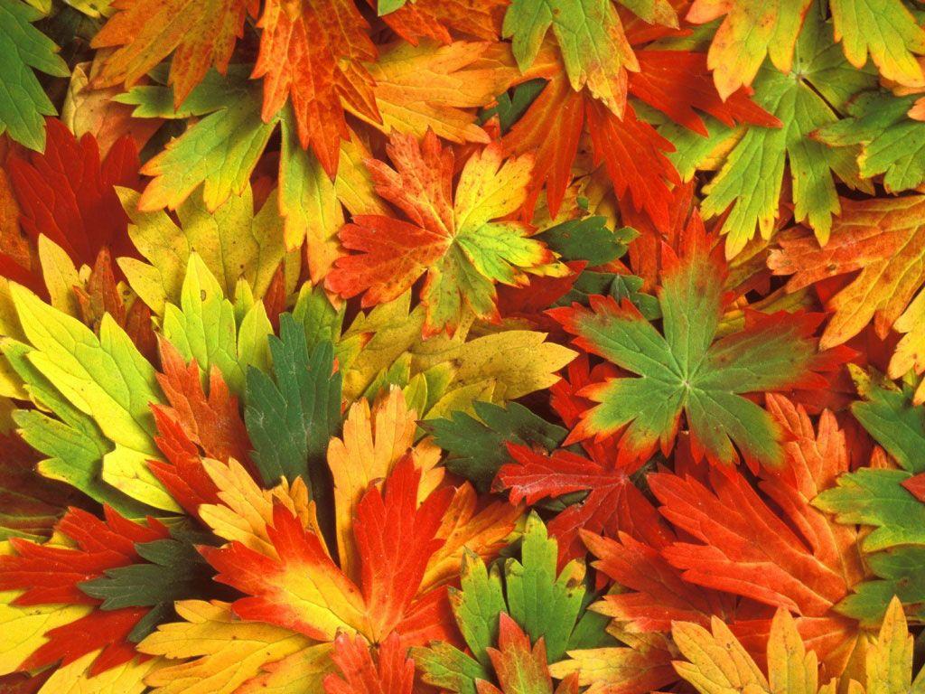 Folhas secas...  Outono, inverno...
