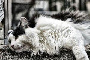 72cc0278d4abbf745f08630222568cf0 - How To Get Knots Out Of A Long Haired Cat