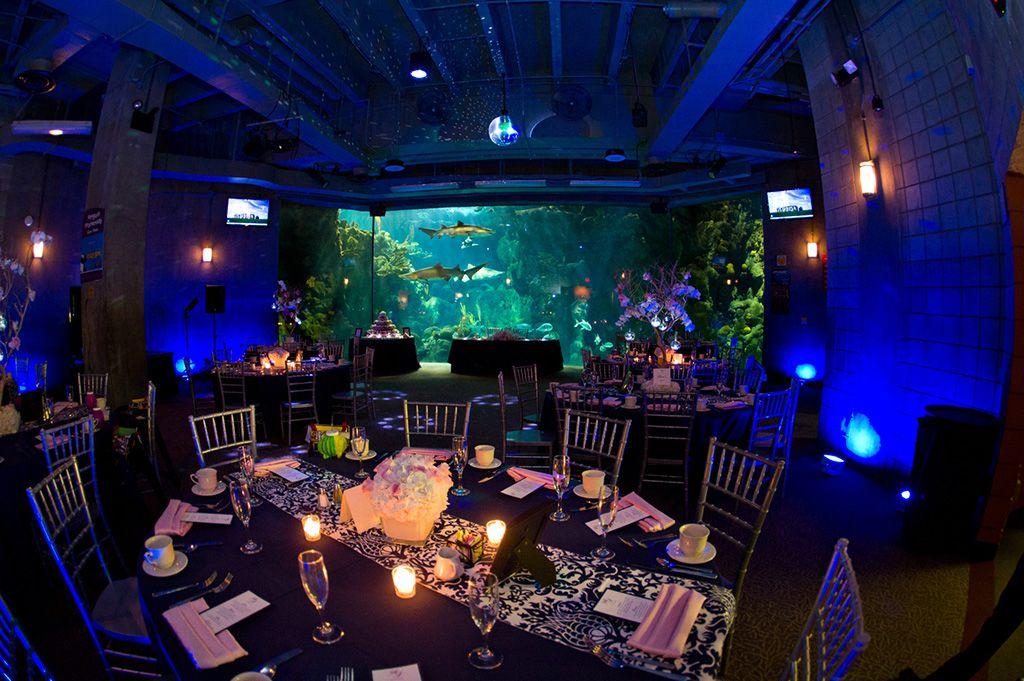 navy pink tampa destination wedding the florida aquarium by aaron bornfleth photographer 24