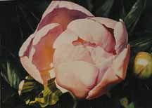 Prints of Watercolor Paintings :: Ann Pember