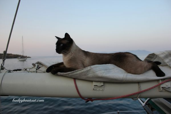 Super Platz With Images Adventure Cat Cats And Kittens Cats
