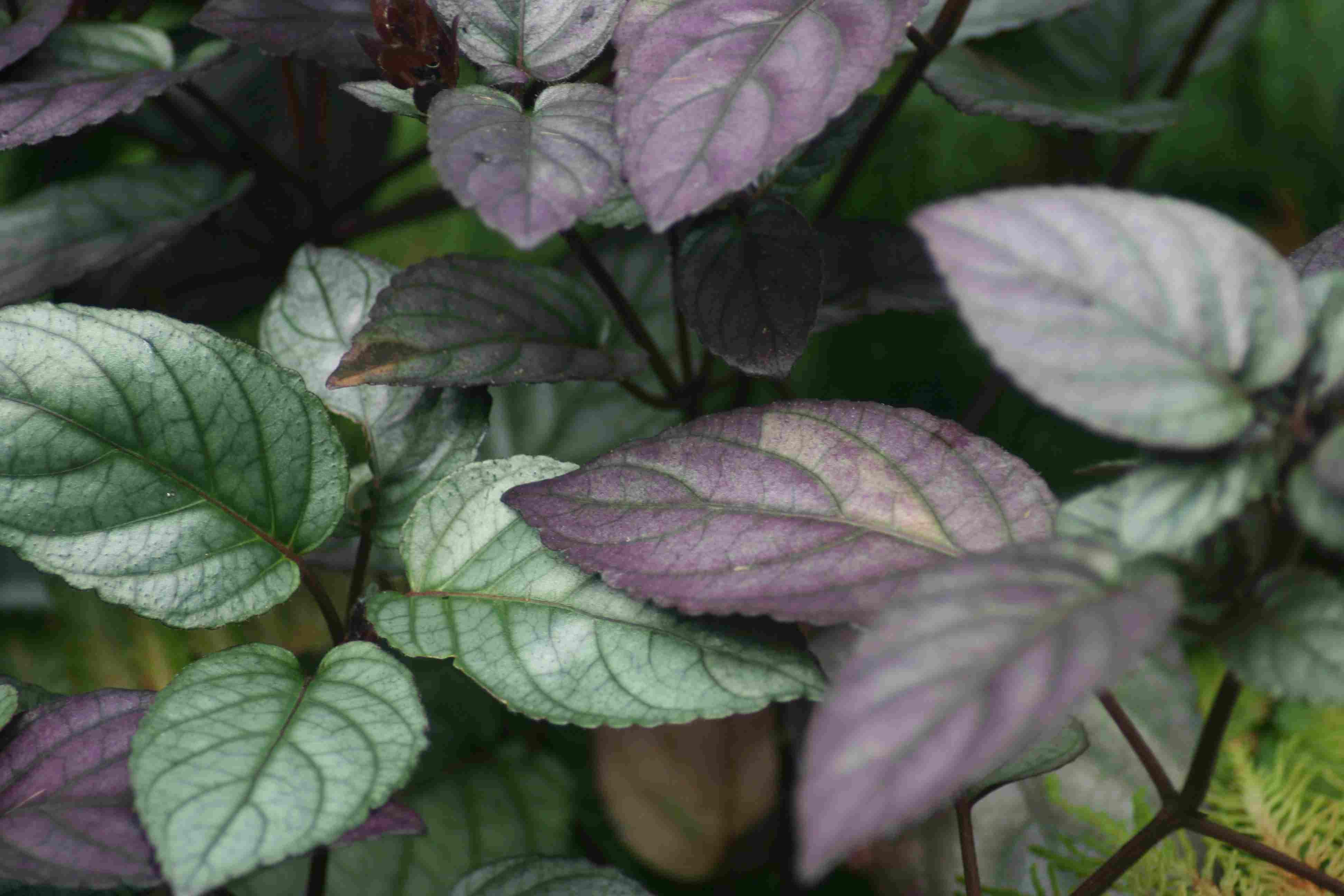 Breathe Easy With Air Cleaning Houseplants Plants