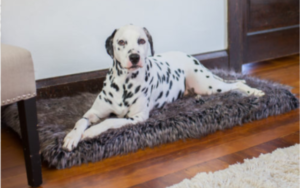hyperkeratosis treatment for dogs