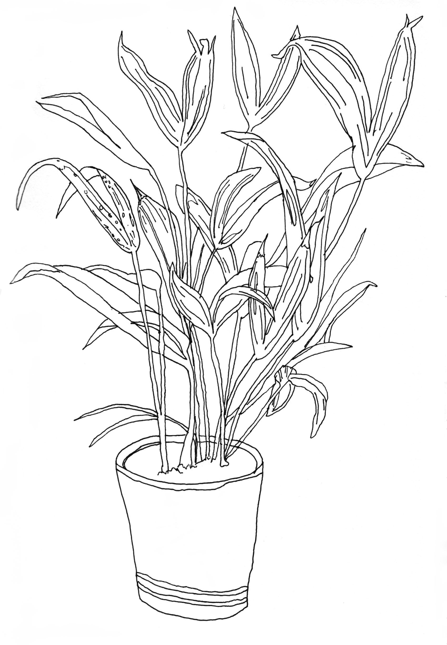 house plants drawing. fine liner line drawing illustration of a house plant by laura carolan plants
