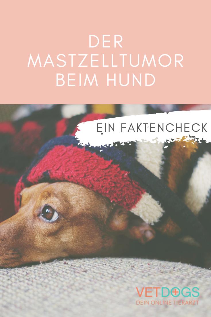 Der Mastzelltumor Beim Hund Tierarzt Hunde Gesunde Hunde