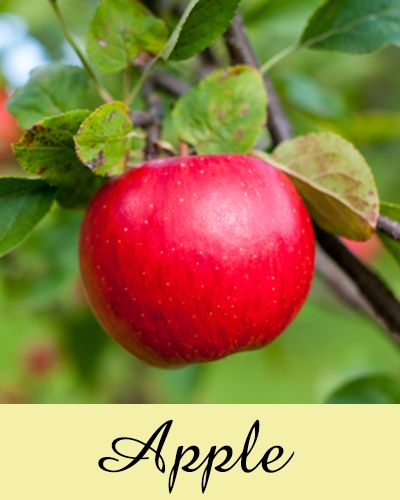 """Save 25% on our new """"apple"""" fragrance. Sweet fragrance, just like the cider!"""