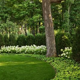 Windsor Companies Traditional Landscape Minneapolis Windsor Companies Traditional Landscape Beautiful Gardens Backyard Landscaping